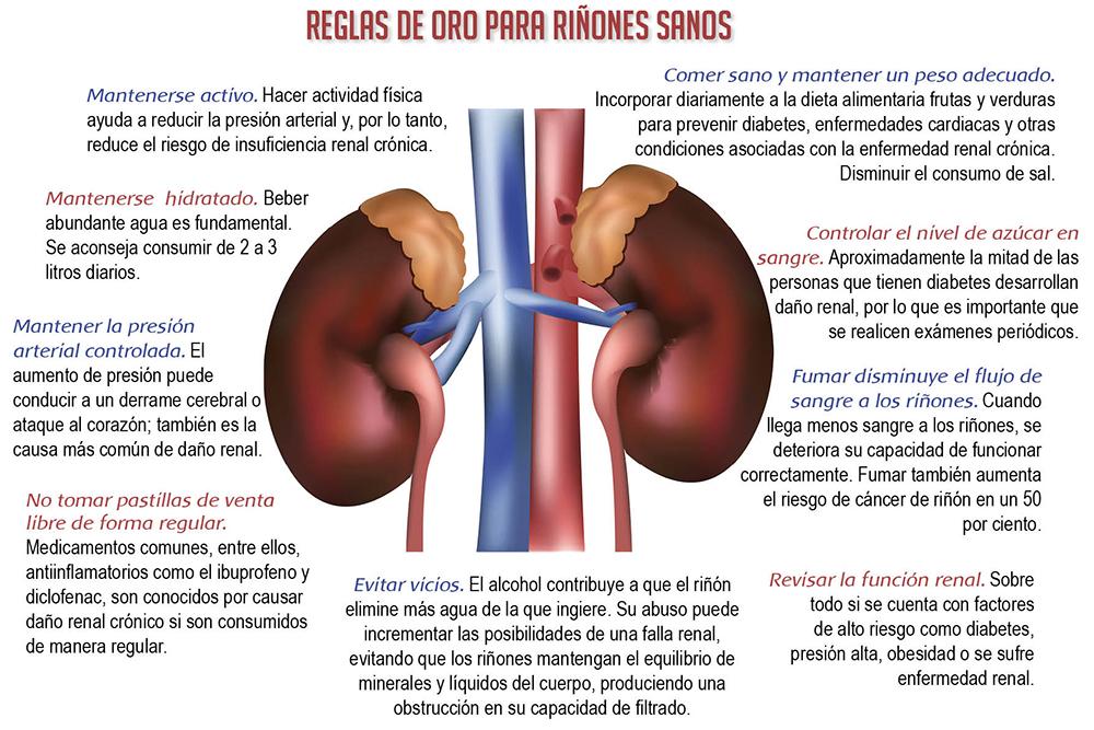 Cómo mantener los riñones sanos de por vida | Revista Surgente
