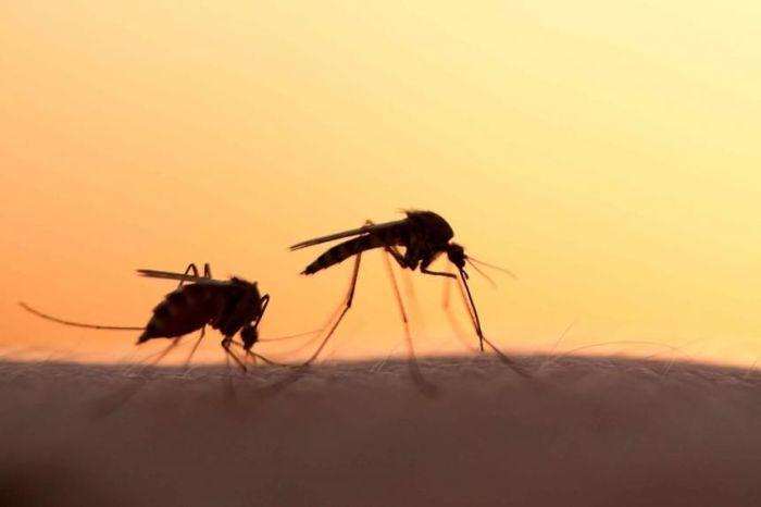 la-fiebre-del-nilo-occidental-tambien-es-transmitida-por-mosquitos-_860_573_1626041