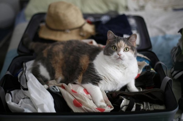 los-gatos-no-son-animales-a-los-que-se-pueda-llevar-facilmente-de-vacaciones-porque-no-les-gusta-dejar-su-hogar-para-utilizar-unicamente-con_860_573_1636730