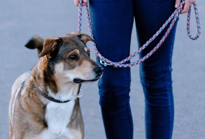 si-durante-el-paseo-el-perro-tira-permanentemente-de-la-cuerda-el-collar-presiona-fuertemente-sobre-la-traquea-y-la-laringe-_843_573_1664507